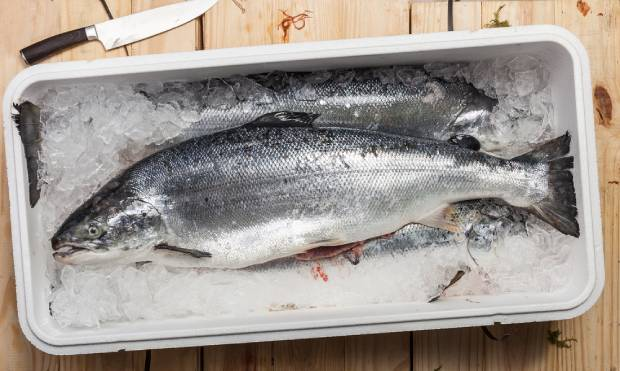Fish in a cooler, prone to leaving fishy smell