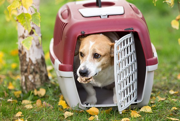Use a travel carrier or pet crate