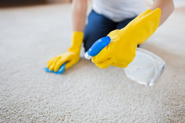 A person closely cleaning a carpet with gloves on