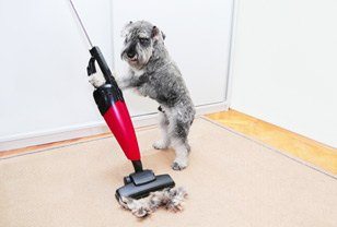 How to Get Dog Hair Out of Your Carpet