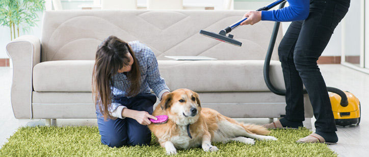 Best vacuum for pet hair - review with a buying guide